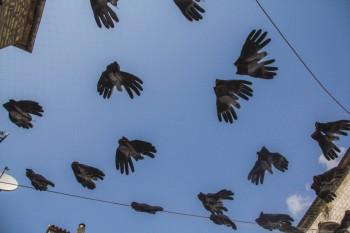 Bird Hands