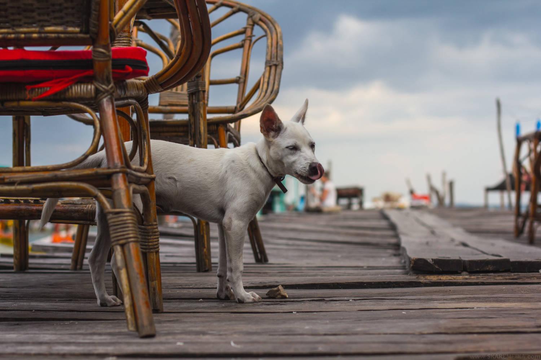 Dock dog