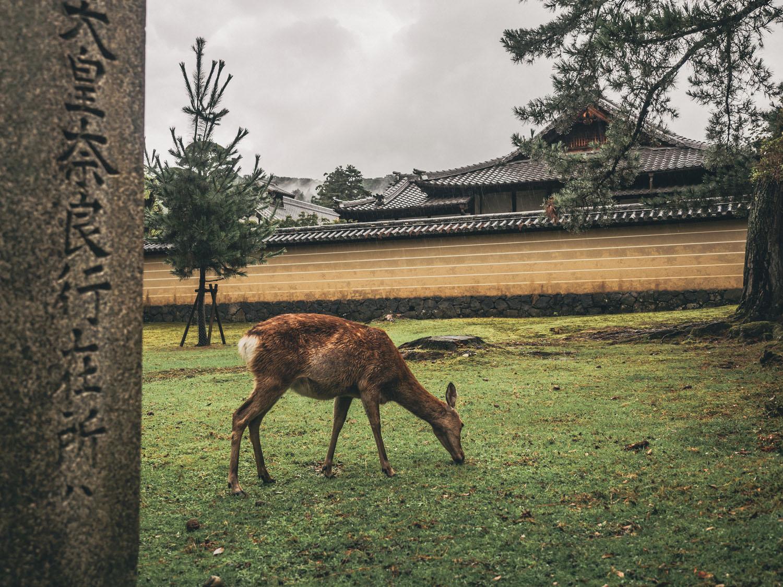 Nara-67