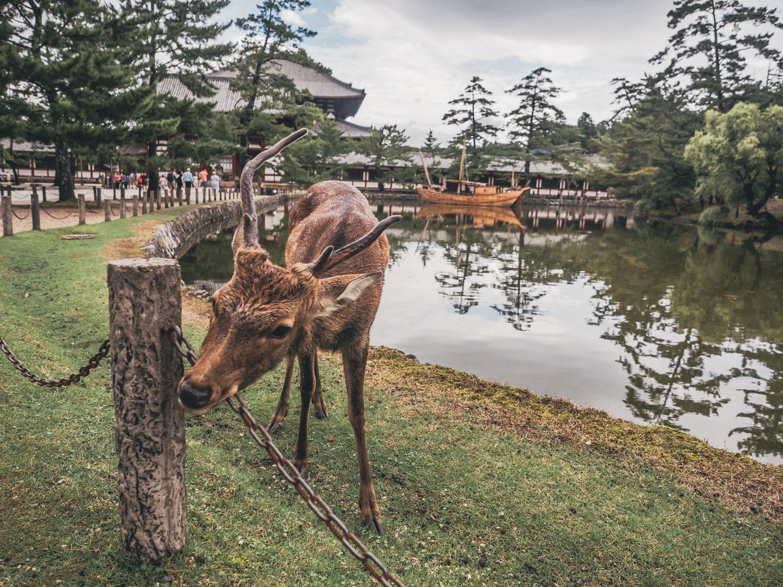 Nara-70